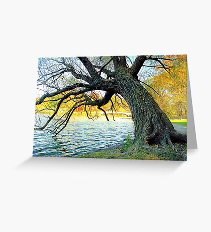 Autumn in New York's Central Park  Greeting Card