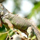 Chameleon by Alexander Gitlits