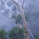 A Foggy Blue Mountains (NSW) Morning by Adrian Paul