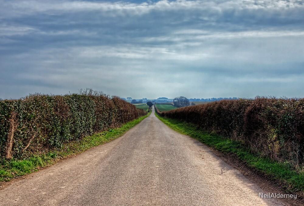 The Long Walk, near Winchester by NeilAlderney