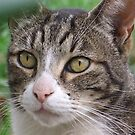 The Old Tabby Friend by Rick Playle