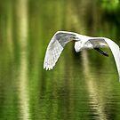 Air Under My Wings by Joe Jennelle