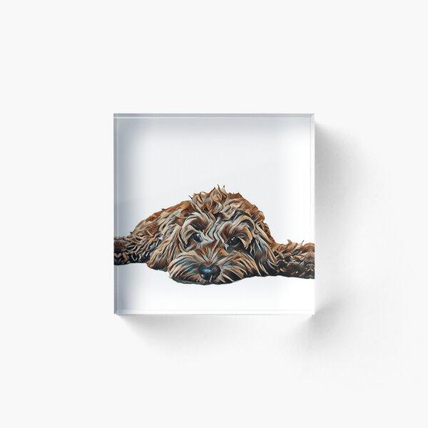 Chocolate/Brown Cockapoo - White Background Acrylic Block