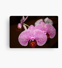 Little Orchids Canvas Print