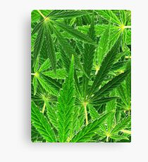 hemp leaf collage Canvas Print