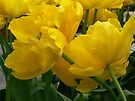 tulips mellow yellow by LisaBeth