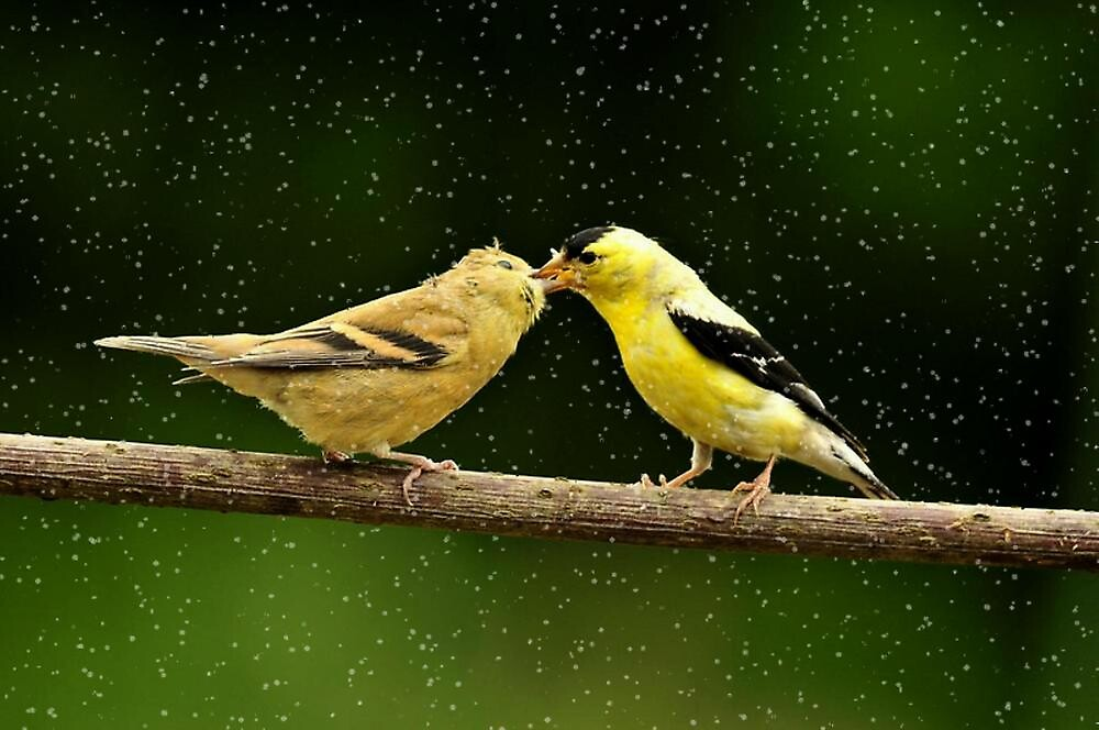 BIRDS TALKING TO EACH OTHER..SEE LINK BELOW... by RoseMarie747