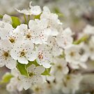 A Little Bit Of Spring by Teresa Young