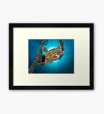 The Frogfish in the rope Framed Print