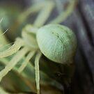 Macro Spider 9 by Sam Mortimer