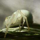 Macro Spider 7 by Sam Mortimer