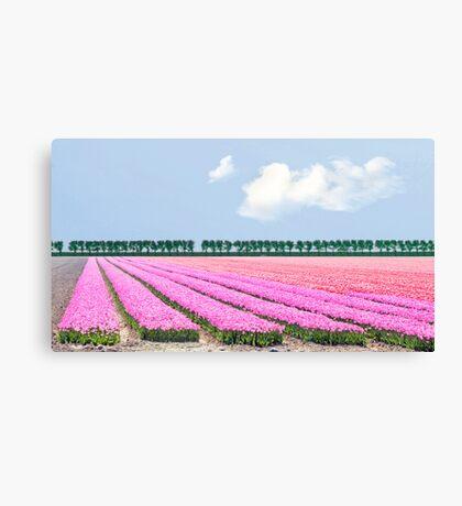 Dutch bulb field Canvas Print