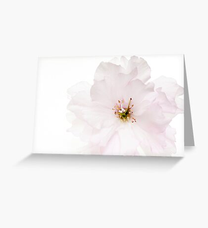 Spring Awakening #3 Greeting Card