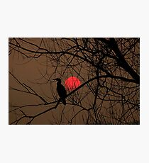 cormorant at sunset Photographic Print