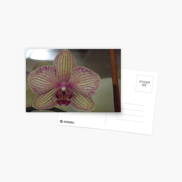 Easter Orchid Postcard