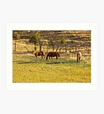 John Holland's Horses Art Print