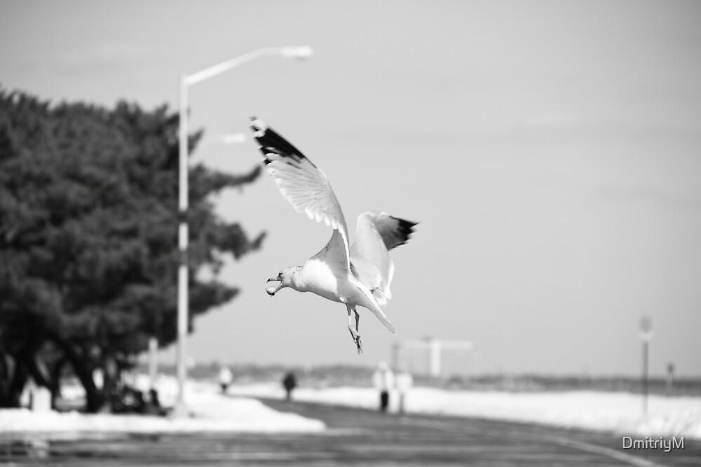 Feeding in Flight by DmitriyM