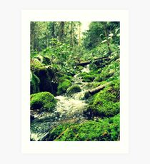 Mossy Riverbanks Art Print