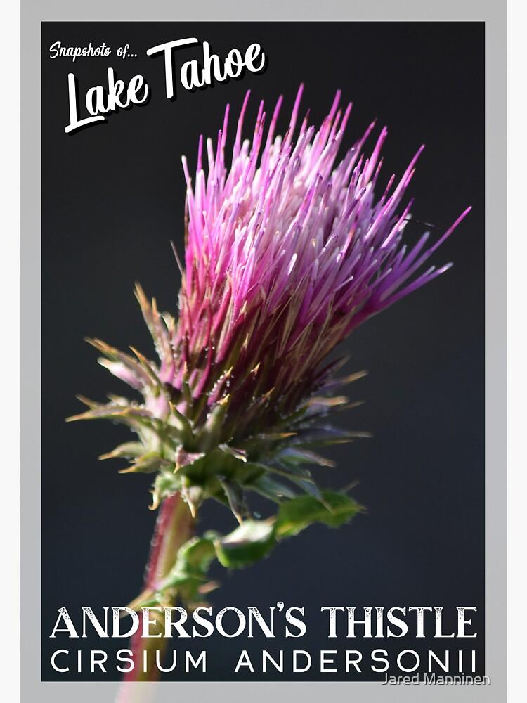 Snapshots of Tahoe: Anderson's Thistle by JaredManninen