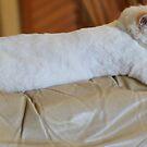 power naps rule! by katpartridge