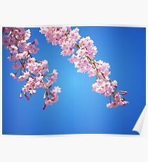 Pink Cherry Blossoms Against A Blue Sky Poster