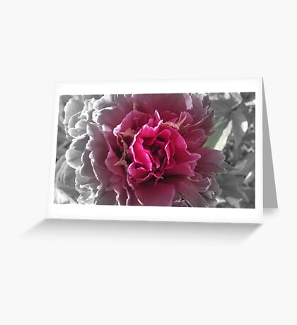 """Peony Fun"" Greeting Card"