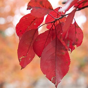 A Fall Day in Saskatchewan  by raquelfletcher