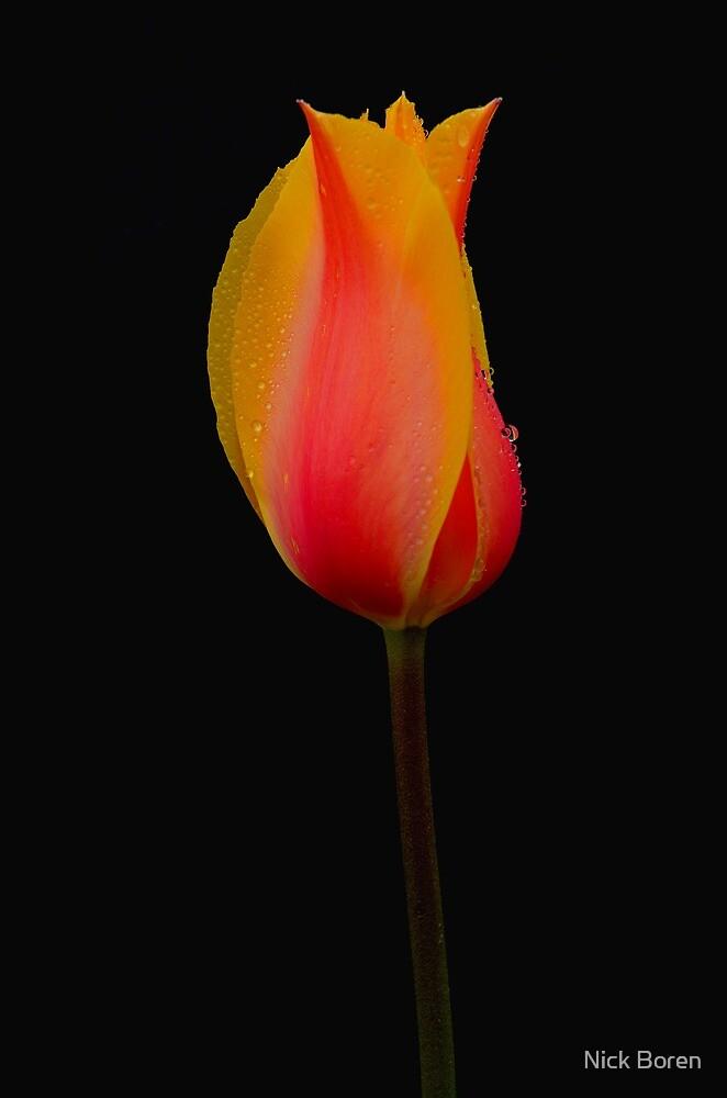 Color On Black by Nick Boren