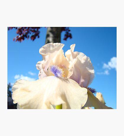 Peach Iris Flower art Blue Sky Floral Baslee Troutman Photographic Print