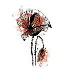 « Illustration Coquelicot - Rouge » par silowane