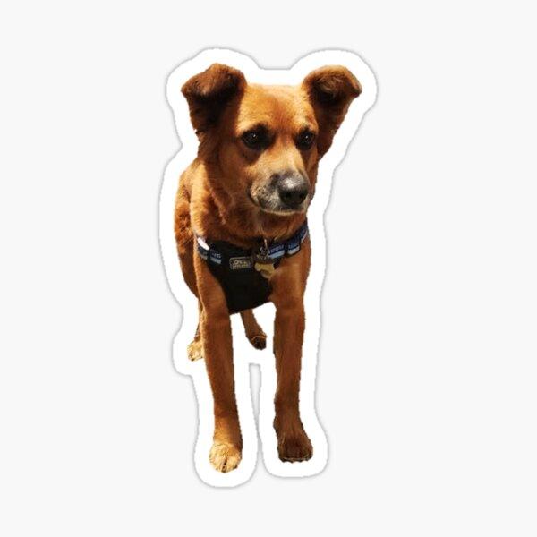 Dixie Dog Palmetto Spaniel Sticker