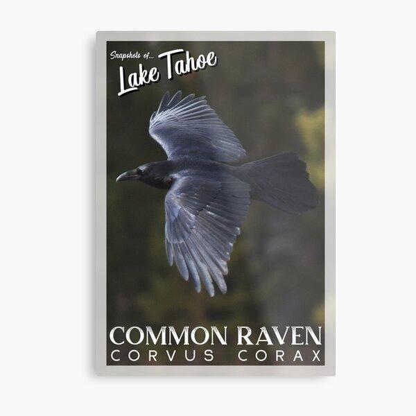Snapshots of Tahoe: Common Raven Metal Print