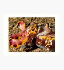 Flamboyant Cuttlefish - Dauin Philippines 2010 Art Print
