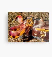 Flamboyant Cuttlefish - Dauin Philippines 2010 Metal Print