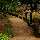 Garden Steps by dazzleng