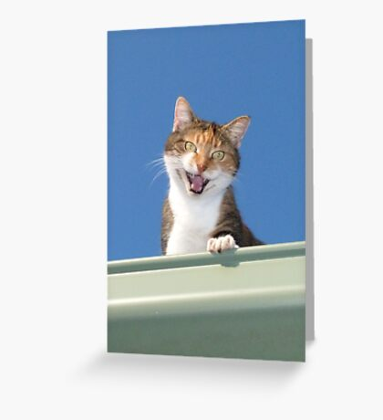 Hello Mabel Greeting Card