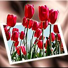 Tulips by Kym Howard