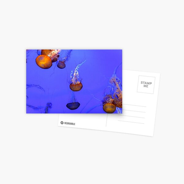 Sea Nettle Jellyfish - orange and blue color Postcard