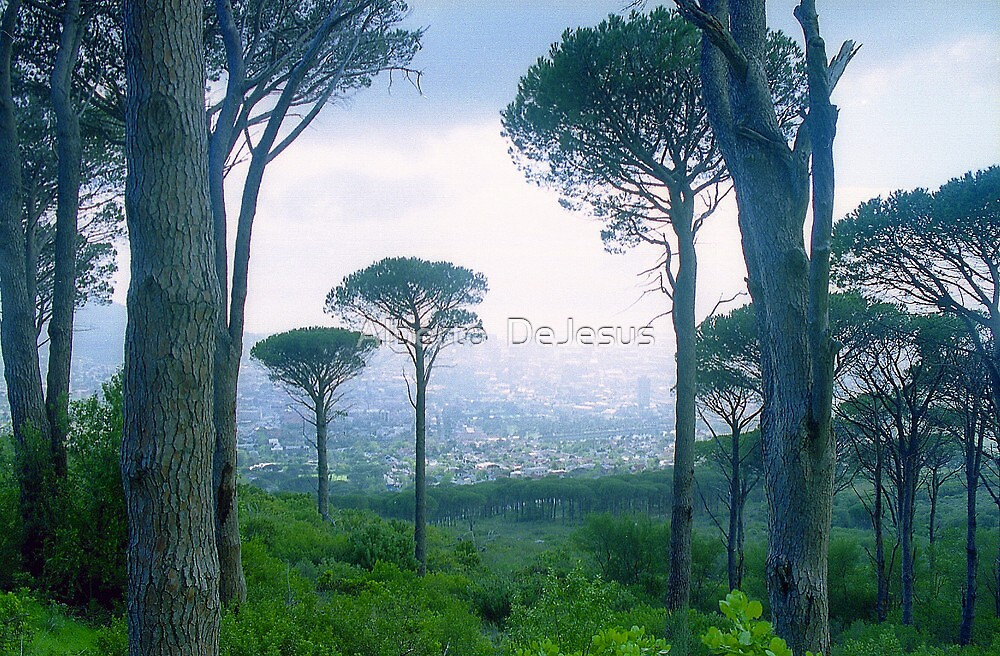 Quot Capetown Trees South Africa Quot By Alberto Dejesus Redbubble