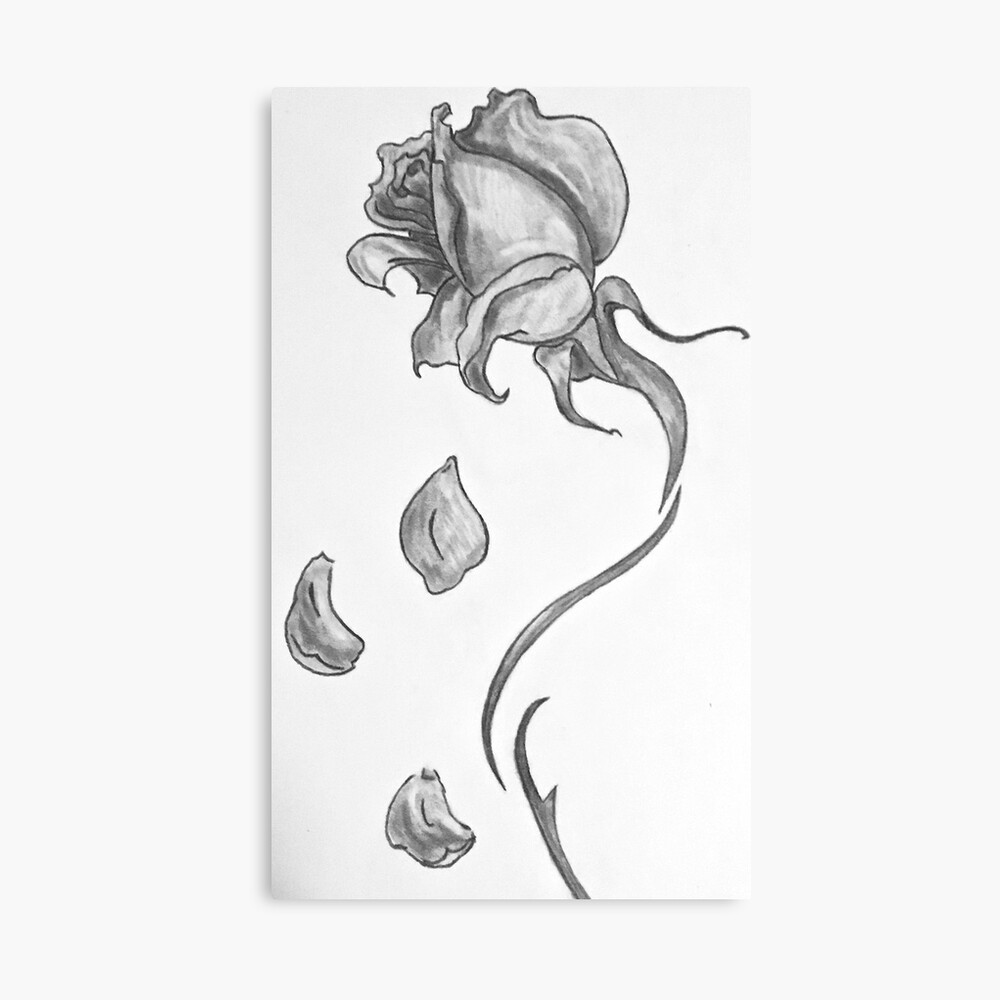 Black And White Rose With Falling Petals Art Board Print By Hannahmedsker Redbubble