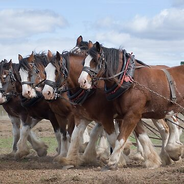 A Team of Six  Clydesdale  by Geetee