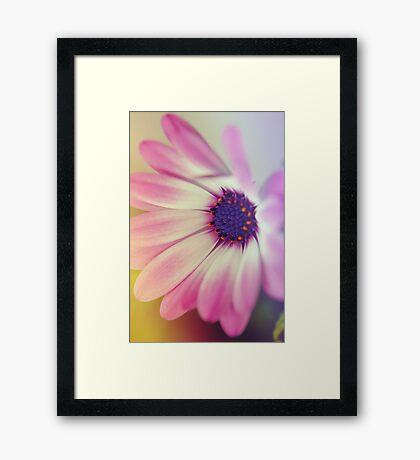 Oh Daisy  Framed Print