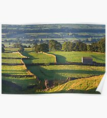 Morning Light near Askrigg - Yorkshire Dales Poster