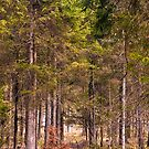 Into The Woods by Richard Downes