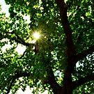 Sunburst by John Hare
