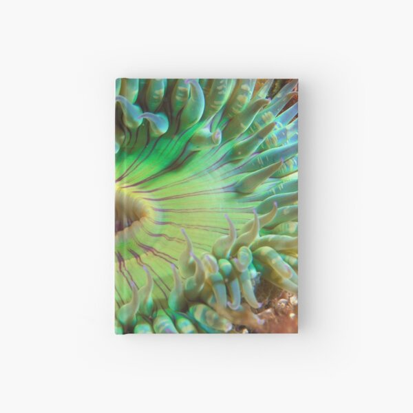 Aggregating Anemone Hardcover Journal