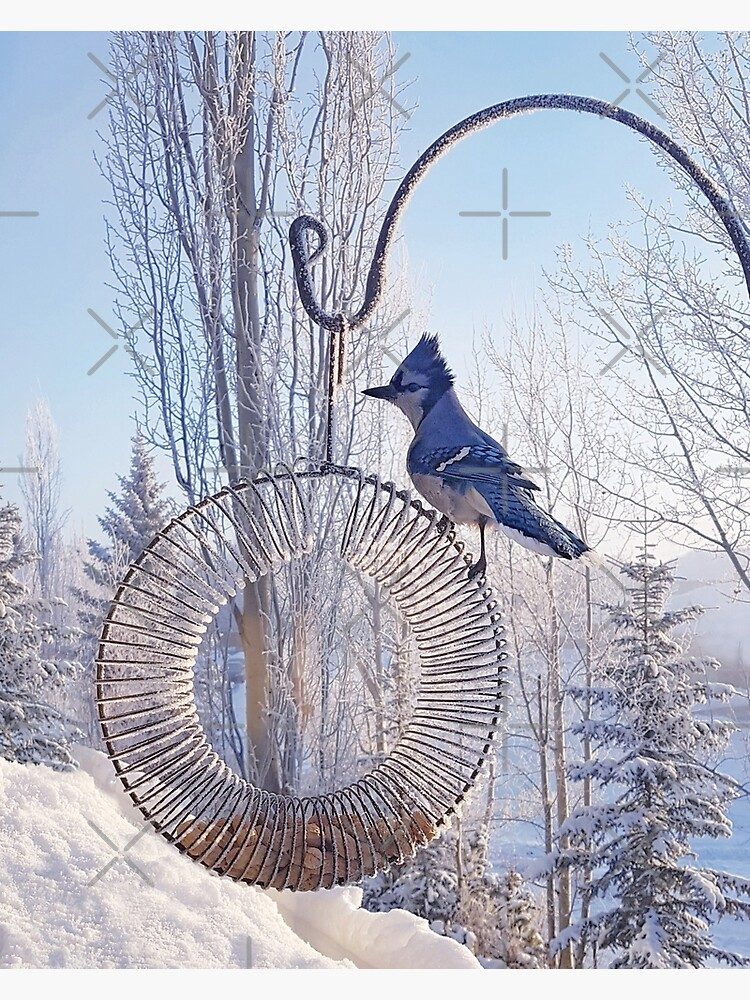 Blue Jay on a Frosty Day by EmilyBickell