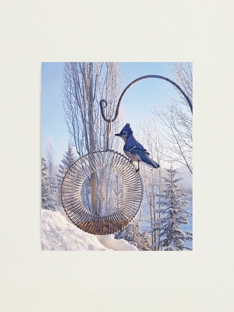 Alternate view of Blue Jay on a Frosty Day Photographic Print