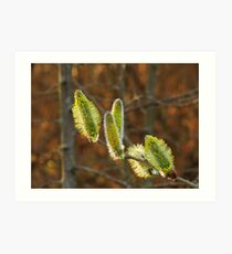 Blooming Willow Art Print