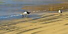 Gulls at Duvauchelle Bay by Yukondick